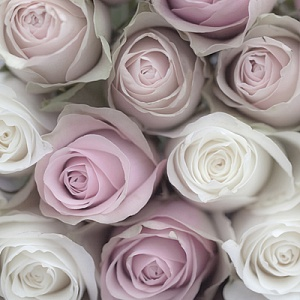 Салфетка для декупажа, 0563, 33х33 см, Розы Sagen ― HandMadeDecor
